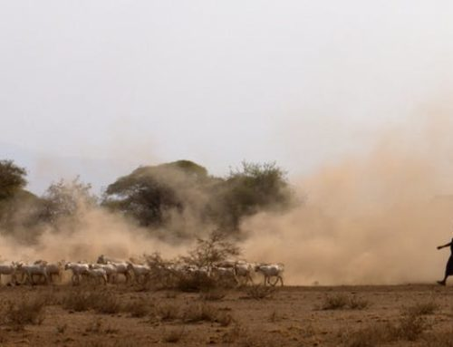 Ancient DNA is revealing the origins of livestock herding in Africa